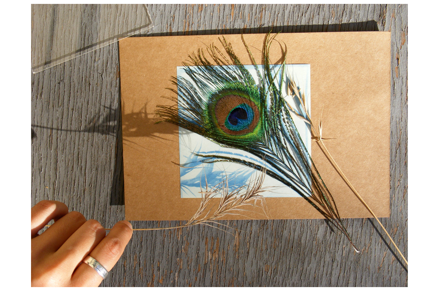 Sunprint with feather