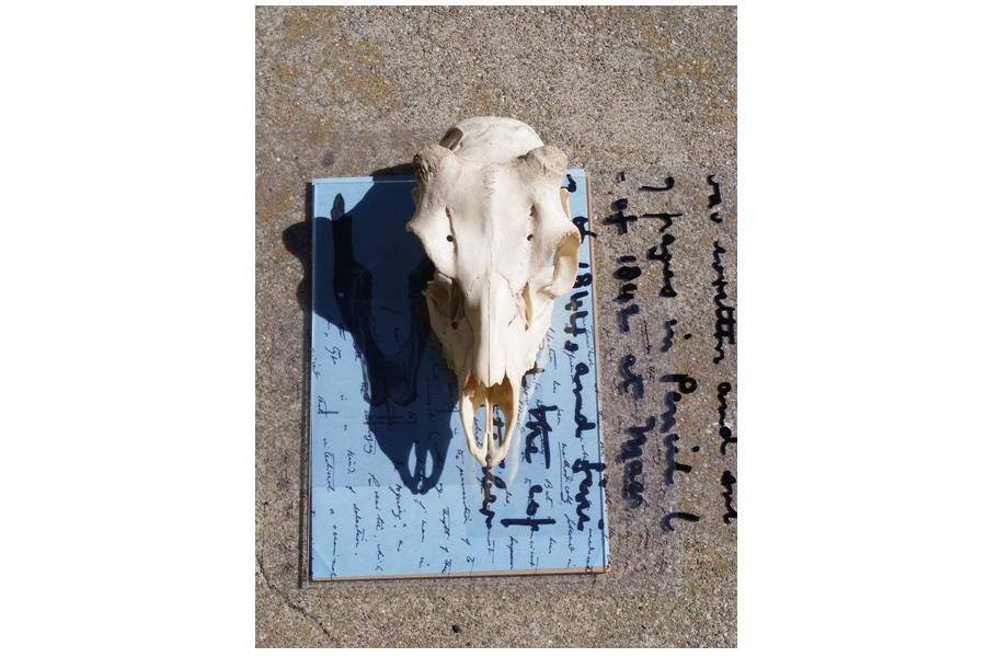 Animal skull and Sunprint